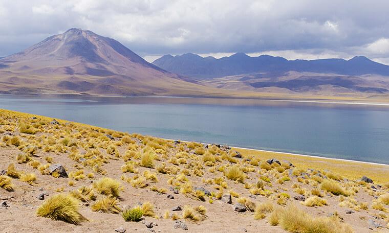 lagunas altiplanicas frente a volcan y paja brava